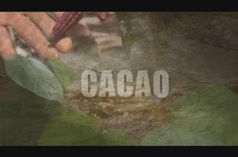Postales de un mundo posible: cacao